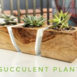 DIY Succulent Planters || how to make