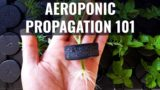 How to Clone Plants: Propagating in an Aeroponic System 101