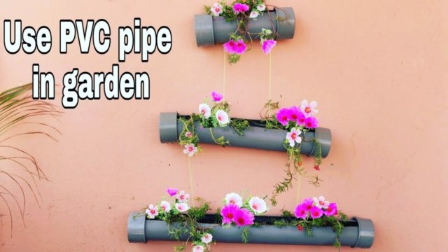 How to grow Portulaca in PVC pipe, vertical garden at your home, Use PVC pipe in gardening, DIY