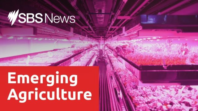 Indoor vertical farming praised as future source of produce