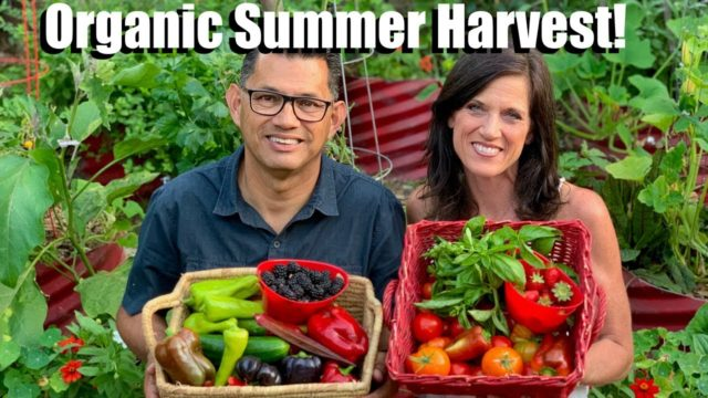 Organic Summer Harvest from the Vegetable Garden Grocery Store (& a Few Surprises!)🍓🥒🍅🍇🌶
