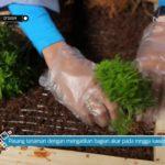 D'Sign – DIY Vertical Garden