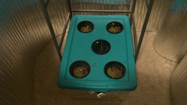 Hydroponic Kratky Lettuce Grow #2:  Lettuce Tub