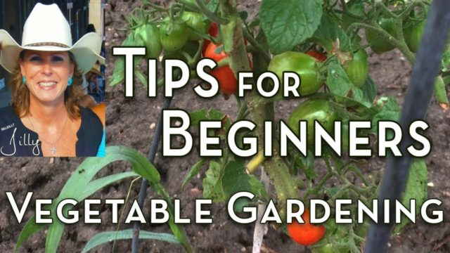 Vegetable Gardening Tips for Beginners
