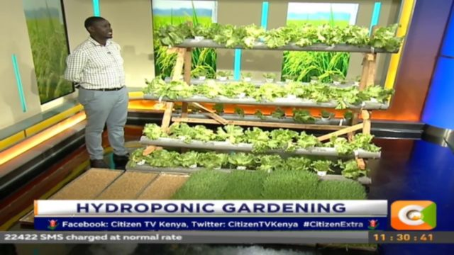 Citizen Extra: Hydroponic Gardening