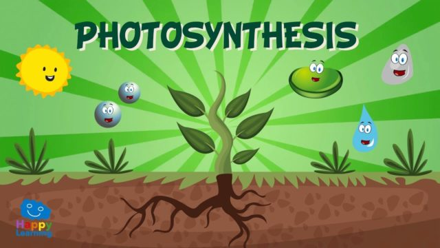 Photosynthesis | Educational Video for Kids