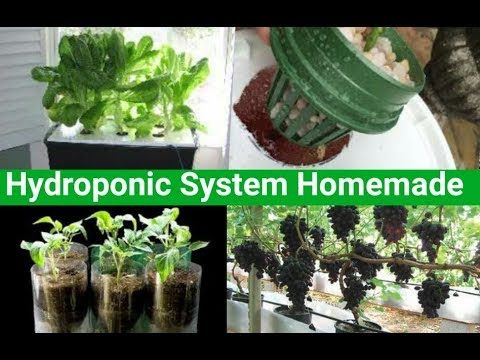 Home made Deep water hydroponic system