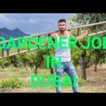 Job in Dubai for indian gardener latest vacancies updates 2018by Ak&sons job's consultancy june