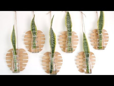 Snake Plant Leaf Cutting Decor Idea to Beautify Your Wall Space