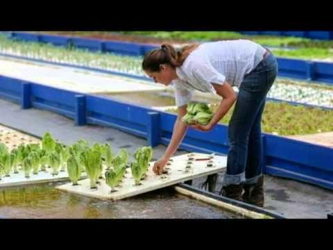 aquaponics system design | diy aquaponics | aquaponics systems