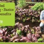 Raised Bed Gardening – Benefits and Basics