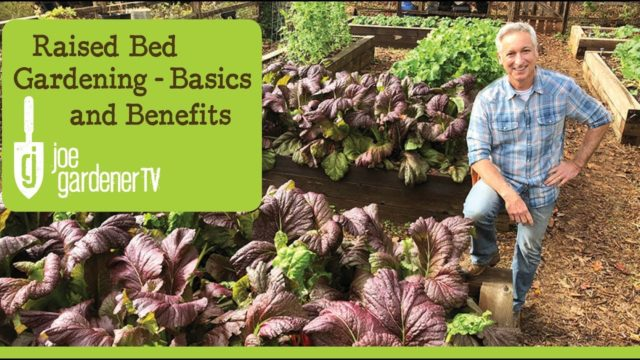 Raised Bed Gardening – Benefits and Basics