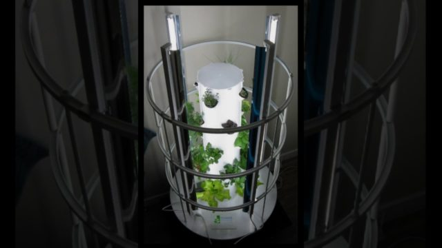 Time Lapse of Hydroponic Tower Garden