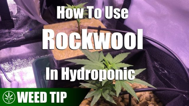 Using Rockwool As A Hydroponic Grow Medium