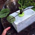 Plastic Free Hydroponic Grow Box / DIY Hydroponics