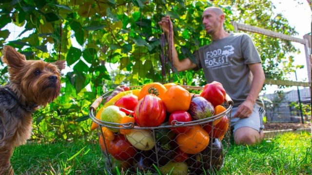 No Dig Gardening Harvest, Backyard Permaculture Food Forest