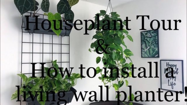 Houseplant Bedroom Tour and living green wall idea!
