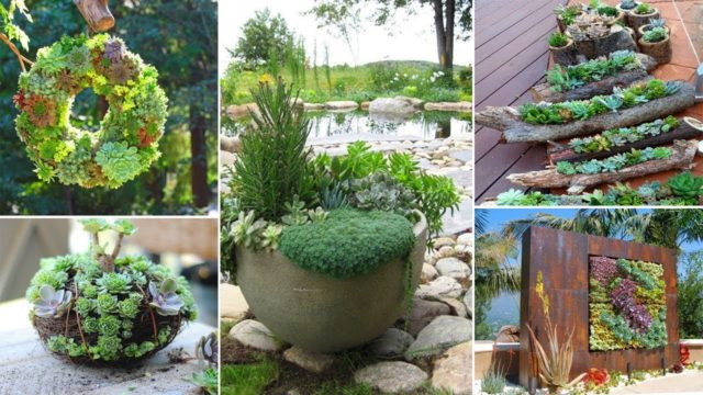 70 Indoor And Outdoor Succulent Garden Ideas | Garden Ideas