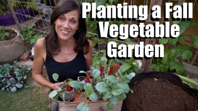 Planting a Fall Vegetable Garden in Raised Bed, Containers & GIVEAWAY! // Fall Garden Series #3