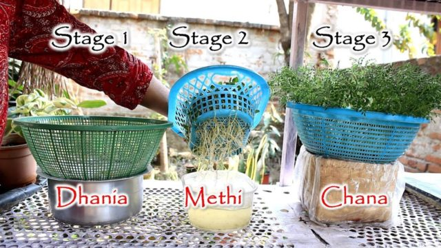 बिना मिट्टी, आसानी से उगाएं पौधे  | Basic Hydroponics for Home Gardeners
