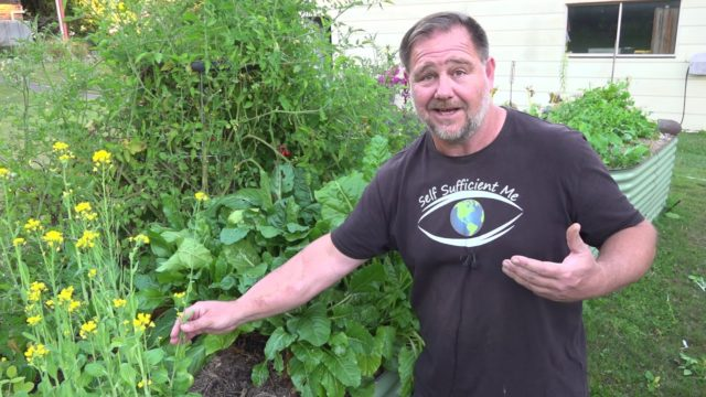 This TOUGH Tasty Plant is a MUST for the Home Vegetable Garden