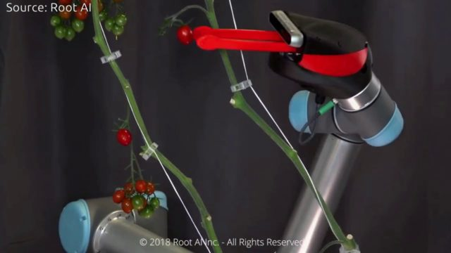 Robot for picking Vegetables in Indoor Farms