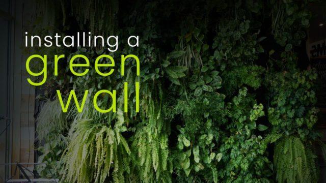 Installing A Green Wall