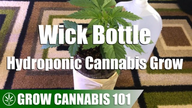 Wick Bottle Hydro Cannabis Timelapse Grow – Bagseed To Flower
