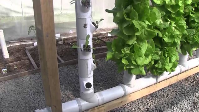Go  Pick a Lettuce -Aquaponics Tower Pockets Plant and  Harvest