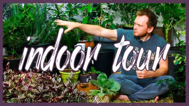 Indoor Garden Tour