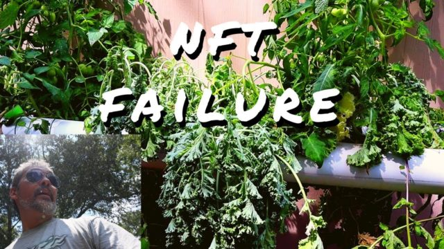 DIY Hydroponics / NFT failure