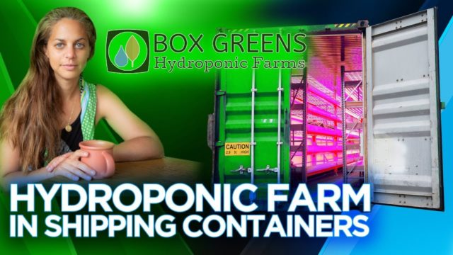 Box Greens Hydroponic Farms in Shipping Containers – Sustainable Sourcing | The Barron Report
