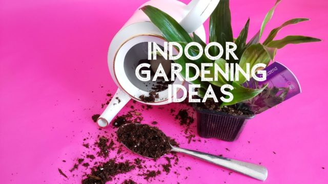 Indoor Gardening Ideas | Kiesha Fraser DIY Mom