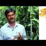 First Time In Asia: Turmeric Vertical Farming from ECN Hi-Tech Agri Pvt. Ltd.
