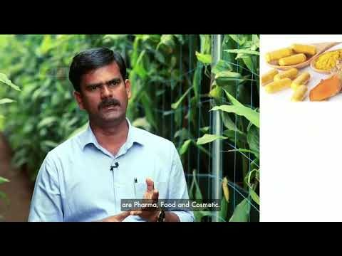 First Time In Asia: Turmeric Vertical Farming from ECN Hi-Tech Agri Pvt. Ltd.
