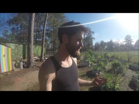 School Garden Food Forest