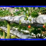 Vertical Farming: Farms of the Future? The Pros & Cons