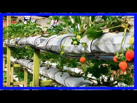 Vertical Farming: Farms of the Future? The Pros & Cons