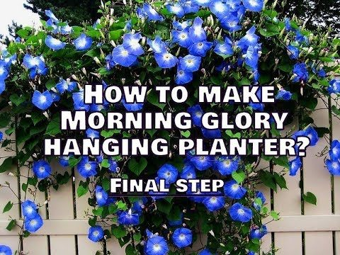 How To Make Morning Glory Hanging Planters?|| Final Step || Whimsy Crafter
