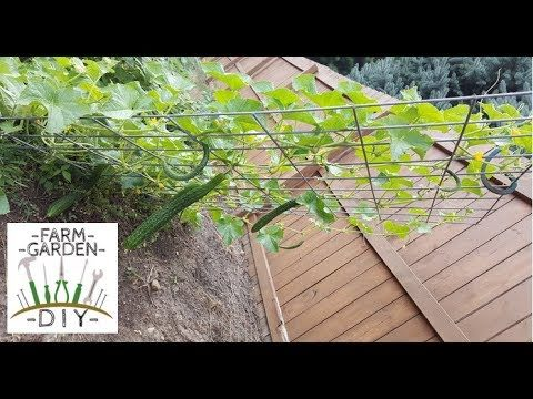 How to make the best tomato cage / cucumber trellis / bell pepper weave