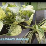 Vertical Hanging planters ideas