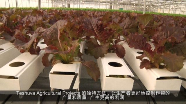 Hydroponic in China- Teshuva Agricultural Projects