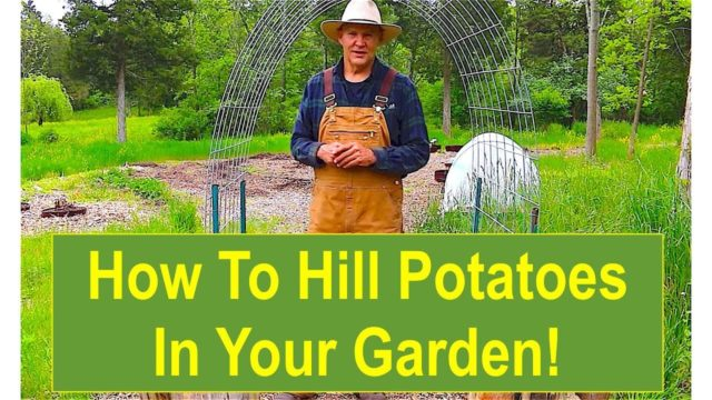 Keep Calm and Learn How to Hill Your Potatoes in Your Garden!