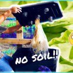 Easy DIY Hydroponics Systems/ hydroponic basil and chard / reminiscing / urban garden