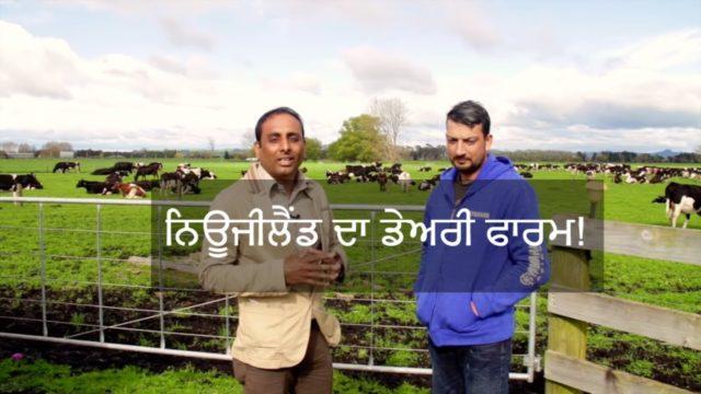 Newzealand Village lifestyle | Pendu Australia| Punjabi Travel Show | Episode 9