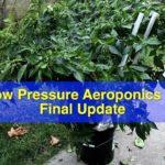 Low pressure aeroponics system 2017 – Final update