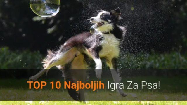 🐕 Igre Za Pse – Top 10 Najboljih Igra Za Psa Koje Ga Čine Sretnijim!