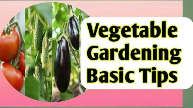 Gardening Tips For Beginners || How to Grow Best Vegetable