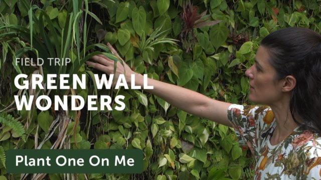 Vertical Gardens at Hort Park, Singapore — Plant One On Me — Ep 131