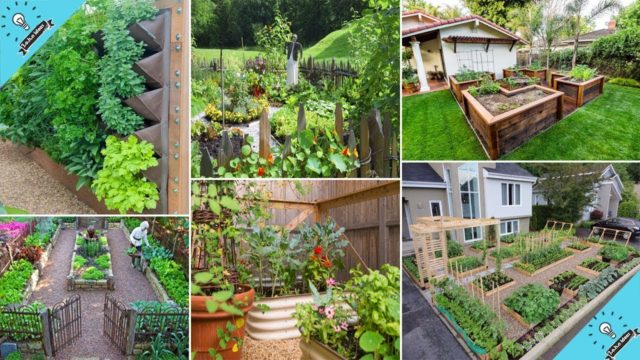 Top 100 DIY Vegetable Garden Ideas | DIY Garden